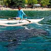 Whale Shark Watching, Tan-Awan Oslob